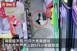中国援助阿尔及利亚新冠疫苗抵阿