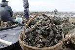 民众初春赶海 成桶挖各色海鲜