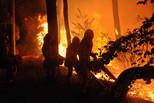12年老消防员的世界