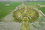 沈阳现巨型3D稻田画 千手观等造型超震撼