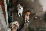 女子收养百只流浪狗:家人断绝来往