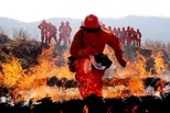 """森林救火队员:火场上的""""烟熏妆"""""""