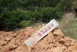 海南9.7亩枯死红树林已补种 11人被问责