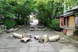 大阪地震有预兆?小震不断鹿群出走
