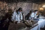 埃及考古工作者在墓葬中发现木乃伊猫