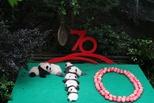 7只新生大熊貓齊亮相 賀新中國70華誕