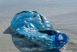 仅9%塑料被回收 塑料有多少环境成本?