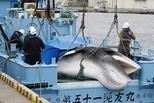 日商业捕鲸船队回港 获1430吨鲸肉