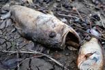 飓风袭美致污水泄漏 河面漂满死鱼