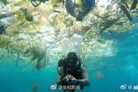 大洋深处带回海洋生物中竟检出微塑料