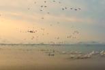 绝美景象!6万多只候鸟湖北湿地齐飞