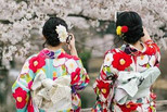 违和?在日穿和服赏樱的大部分是中国人