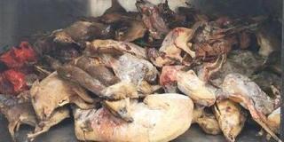 冷鲜店查出7000余只野生动物死尸