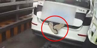 """轿车后备厢伸出两只""""脚"""" 警方拦下后惊呆"""