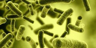 能杀死癌细胞的感冒病毒被发现