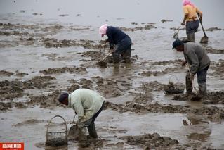 禁渔期海鲜价格大涨 村民蜂拥下河挖蚬