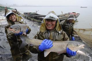 渔民捕19公斤重头鱼 拍出40万元天价
