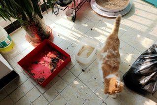 武汉留守宠物救助行动被迫停止