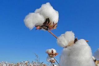 新疆棉花丰收背后的科技含量有多高