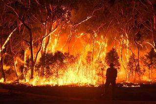 澳大利亚183人涉山火相关犯罪被捕