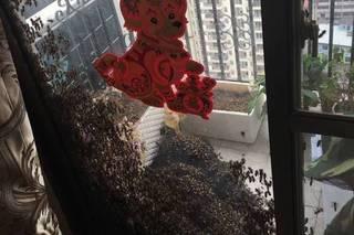 女子送孩上学 回家看见阳台这一幕