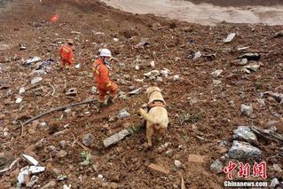 贵州水城滑坡救援:犬搜人刨不放弃希望
