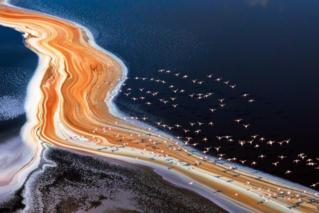 火烈鸟飞掠盐湖汇成粉红海洋 令人惊叹