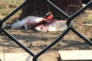 丹顶鹤被打出血?园方:饲养员被啄后反击