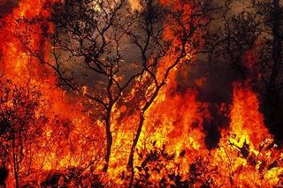 """森林防火,如何防患于未""""燃""""?"""