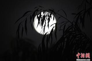 明月当空照 中秋月色哪款最迷人?