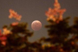 古铜色月亮!中国1月31日可观赏月全食