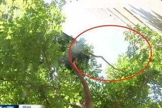 6岁男孩从14楼坠下被大树阻挡 生死未卜