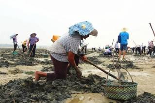 养殖场被清后 上千人涌入海滩挖海鲜
